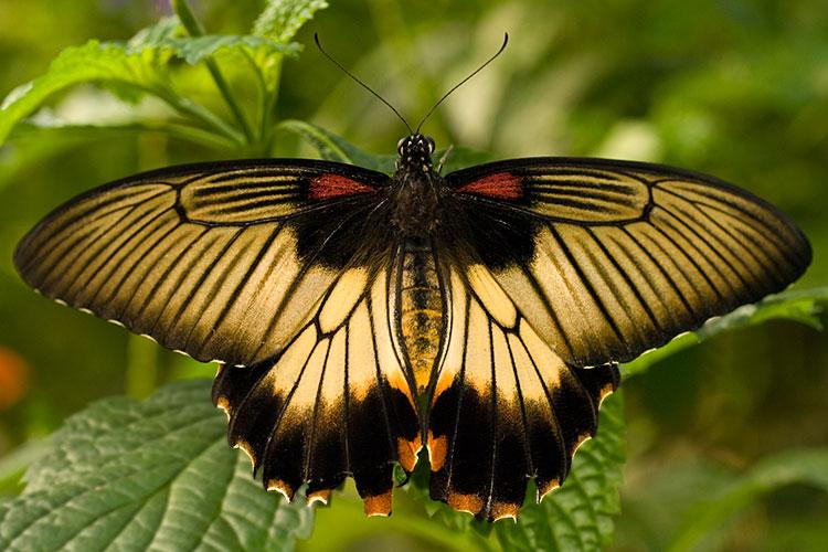 Image Biechele Backlit Butterfly