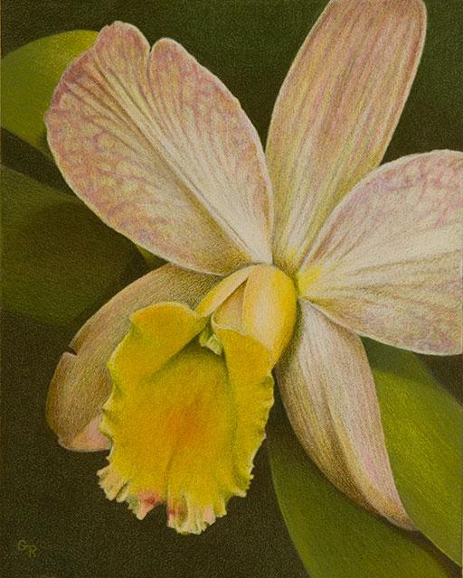 Image Ruuska Orchid